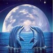 imagenes delfines