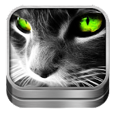 Free Download Cat Sounds and Wallpapers APK for Samsung