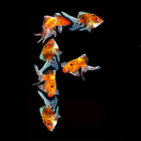 Goldfish F by Janna Morrison - Typography Single Letters ( f )