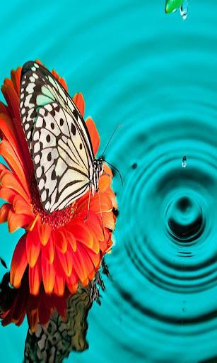 HD蝶の第1巻