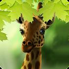 Giraffe HD Parallax Live Wallpaper Free icon