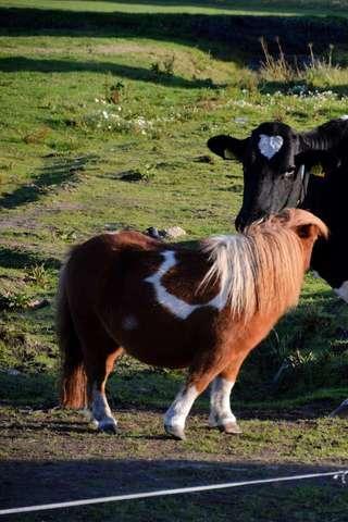 無料解谜Appの乳牛のパズル|記事Game