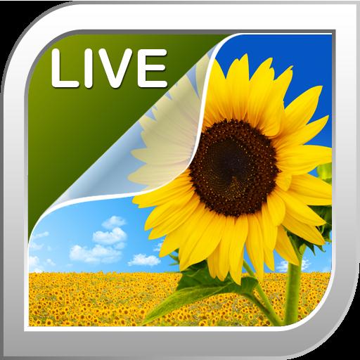 Sunflower現場Wallpaper 個人化 App LOGO-硬是要APP