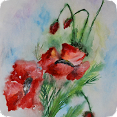Poppies. Flower watercolor