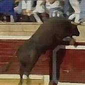 Bulls Revenge TV: LOL Matador