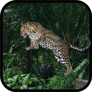 Wild Leopard Simulator 3D for PC and MAC