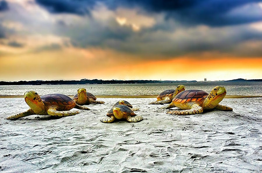 Invasion by Max Samson - Instagram & Mobile Android ( veera, beach, turtle, mobile, animal,  )
