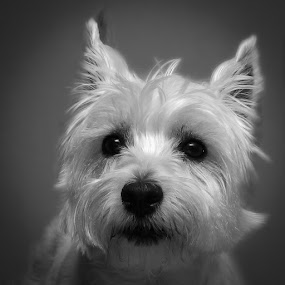 LEXI 2 by Krishna & Garuda (Adrian Radu) - Animals - Dogs Portraits ( #showusyourpets, black and white, #garyfongpets, animal,  )
