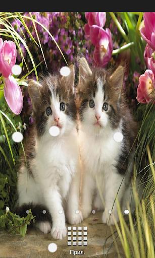 Kittens Live Wallpaper Full