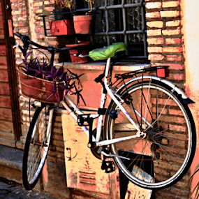 The Planter by Rita Uriel - Artistic Objects Other Objects ( plant, bike, rome, house, italy,  )