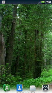 Redwoods Live Wallpaper - screenshot thumbnail