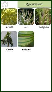 Arecanut Kannada - náhled