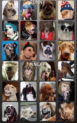 玩娛樂App|狗和小狗声音免費|APP試玩