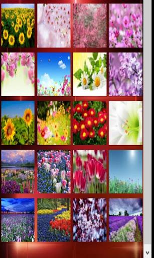 Spring Flowers Wallpaper+Frame