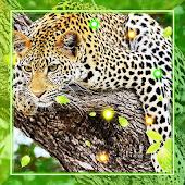 Jaguar Country live wallpaper
