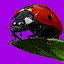 Ladybugs Alive! Wallpaper 1.0.1 APK for Android