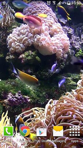 免費下載個人化APP|熱帶水族館动态桌布(PRO&FREE) app開箱文|APP開箱王