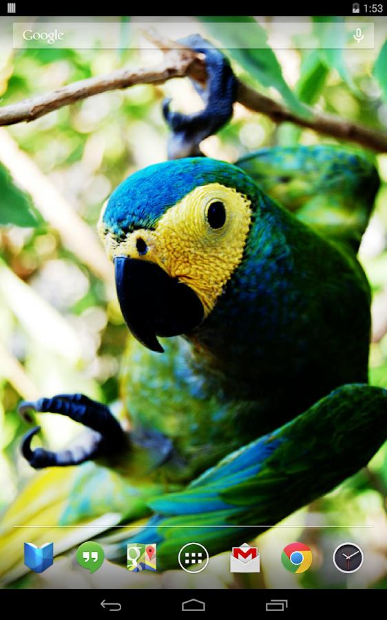 Parrots Live Wallpaper - screenshot