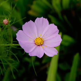 by Glenn Valentino - Flowers Single Flower