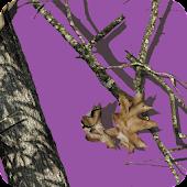 Mossy Oak Purple Theme