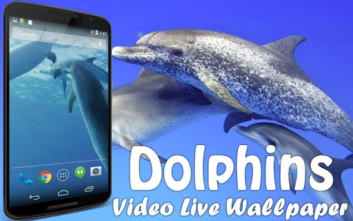 Dolphins Video Live Wallpaper