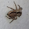 Gray wall Jumper(Female)