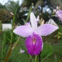 Linda orquidea