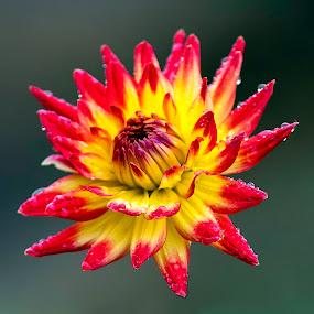 by Larry Rogers - Flowers Single Flower