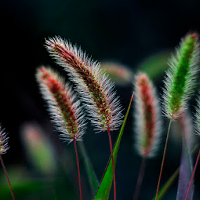 by Dragana Trajkovic - Nature Up Close Leaves & Grasses ( , fall, color, colorful, nature )