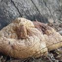 False Truffles