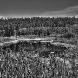 Frog Pond-1.jpg