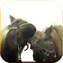 Horses lick screen Wallpaper icon