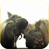 Horses lick screen Video LWP