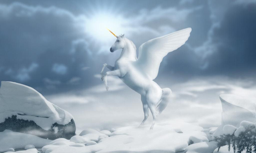 3d Beautiful White Horse Wallpaper White Horse Wallpapers