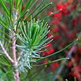 Identify that Tree - California