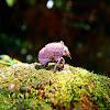 Cicada's Exoskeleton