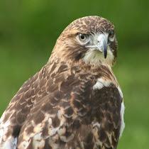 Ohio Birds and Wildlife