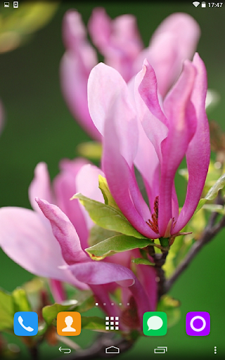 Tulip Tree Live Wallpaper