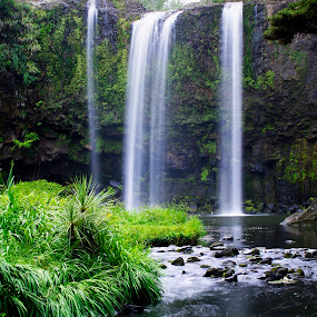 Whangarei Falls - NZ by Mark Anolak - Landscapes Waterscapes (  )