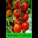 Tomato Culture logo