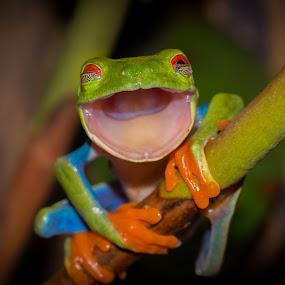 Laughing like A Old Woman by Kutub Macro-man - Animals Amphibians ( #showusyourpets, #garyfongpets )
