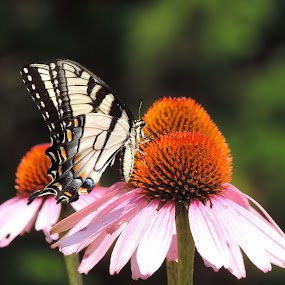 by Michelle Cutt - Flowers Flowers in the Wild ( wild flower, butterfly,  )
