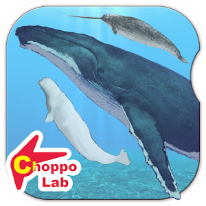 Whales & Dolphins of the World for PC and MAC