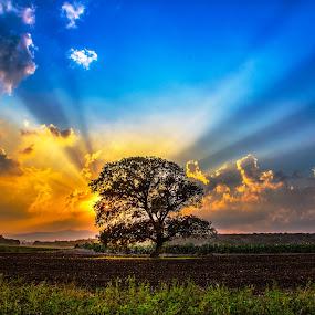 Burning Bush by Assi Dvilanski - Landscapes Sunsets & Sunrises ( tree, sunset, sunrays, meadow, burning bush, sun )