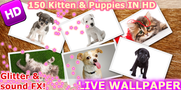 Kitten & Puppy Live Wallpaper - screenshot thumbnail