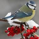 Birds & Nature Wallpaper logo