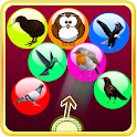 Bird Bubble Shooter icon