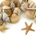 Sea shells Live Wallpaper icon