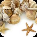 Sea shells Live Wallpaper icon
