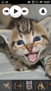 Cat & Dog Sounds screenshot